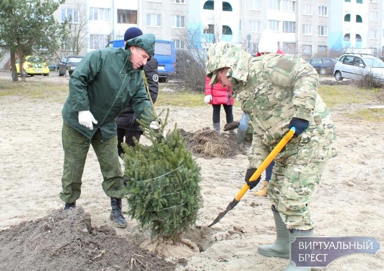 В заречной части Московского района прошел субботник - высадили деревья