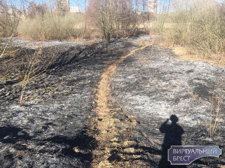 Причины пожаров в экосистеме - низкая культура поведения граждан (человеческий фактор)