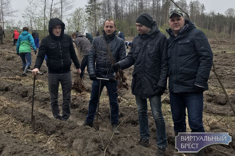 В республиканской акции «Неделя леса-2019» принимают участие предприятия города Бреста