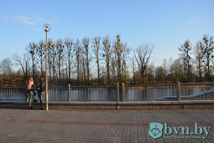Как изменения в законе «О растительном мире» отразятся на деревьях в Бресте