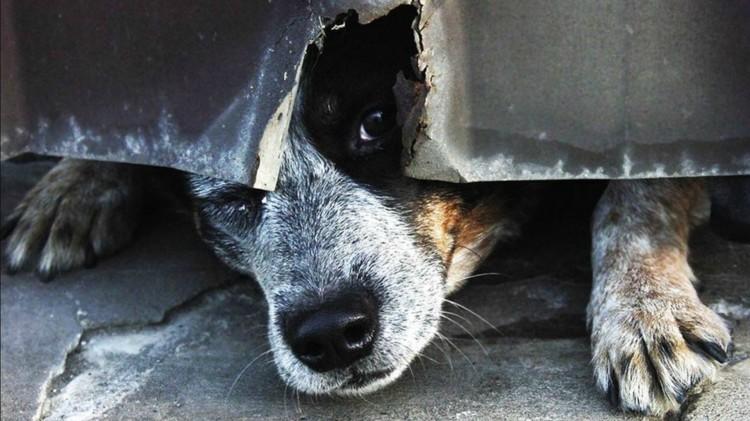 Прокуратура проверила, как соблюдается законодательство в отношении безнадзорных животных