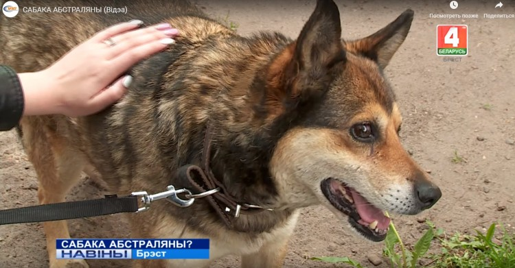 В одном из водоемов Брестского района обнаружена собака с ранами, похожими на пулевые