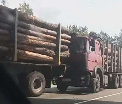 Два лесовоза столкнулись при полной загрузке. Но обошлось