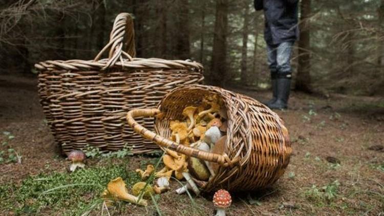 В Ивацевичском районе искали и нашли ушедшую в лес за ягодами пенсионерку