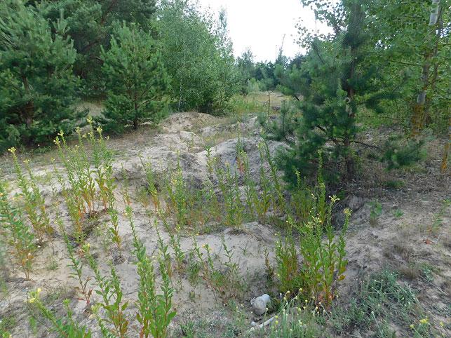 В Кобрине грибник обнаружил костные останки 70-летней давности