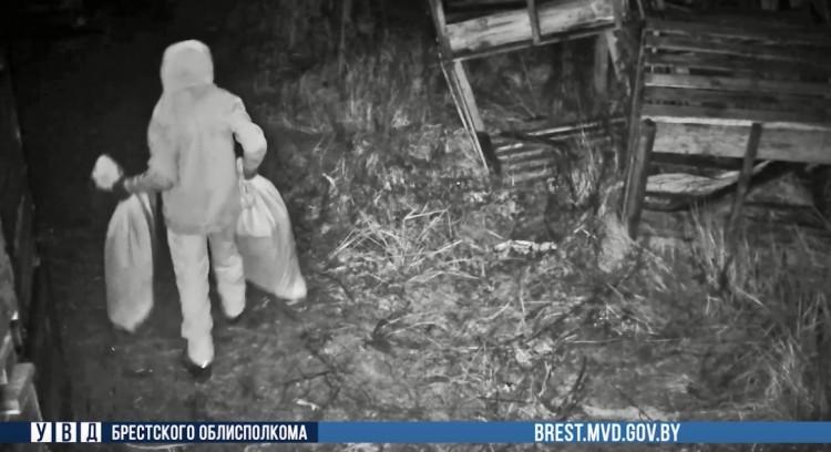 Сыщикам пришлось установить камеру наблюдения, чтобы вычислить похитителя голубики