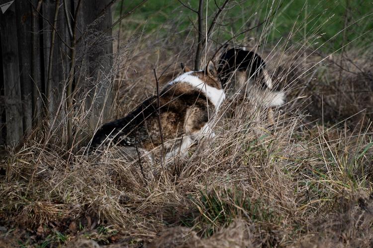 Собаки в Ивацевичах