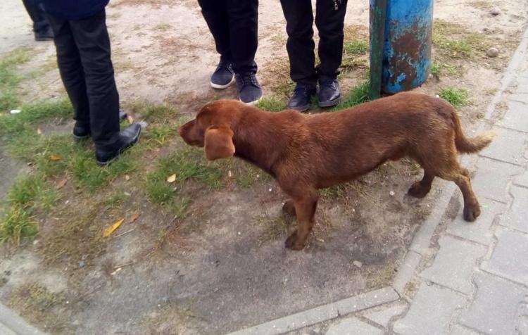 Эту собаку Оксана со школьниками спасла прошлой зимой: иголки достали, животное отпоили