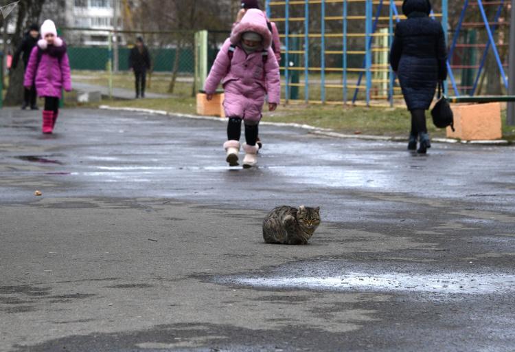 Местные охотно подкармливают животных: кот вольготно устроился на территории школы