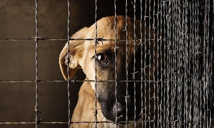 Житель Барановичей обвиняется в жестоком обращении с животным и угрозе убийством