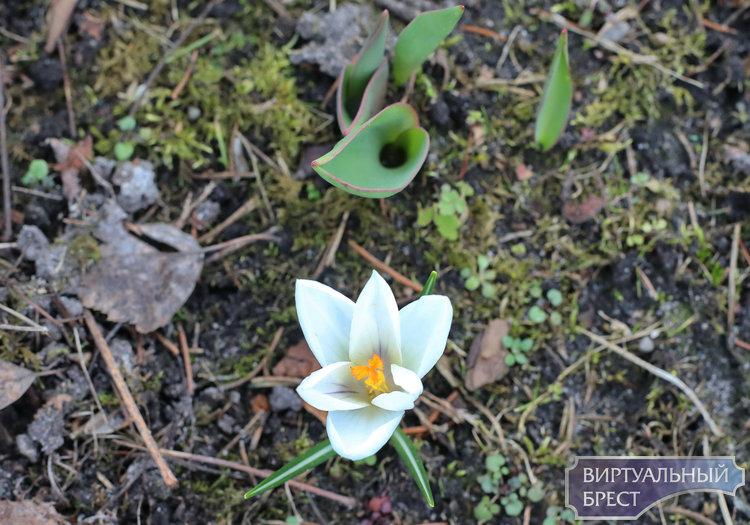 Поздравляем всех девушек города Бреста с весной, и конечно, дарим цветы. Живые!