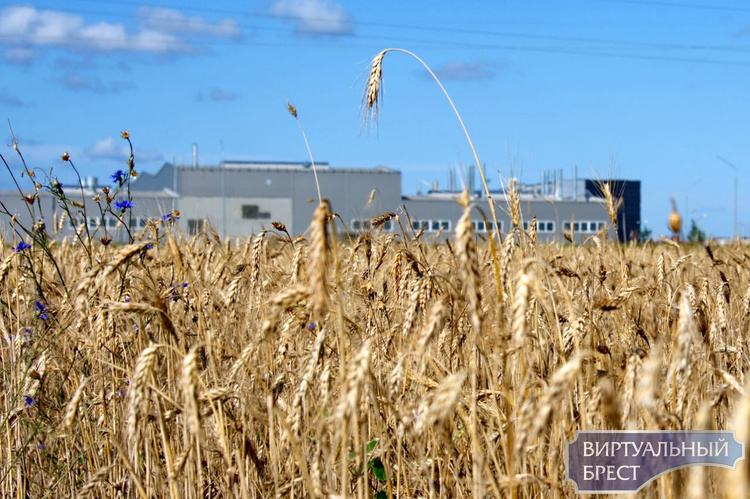 «Экодом» обратился к брестским властям с просьбой принять срочные меры в связи с аккумуляторным заводом в Бресте