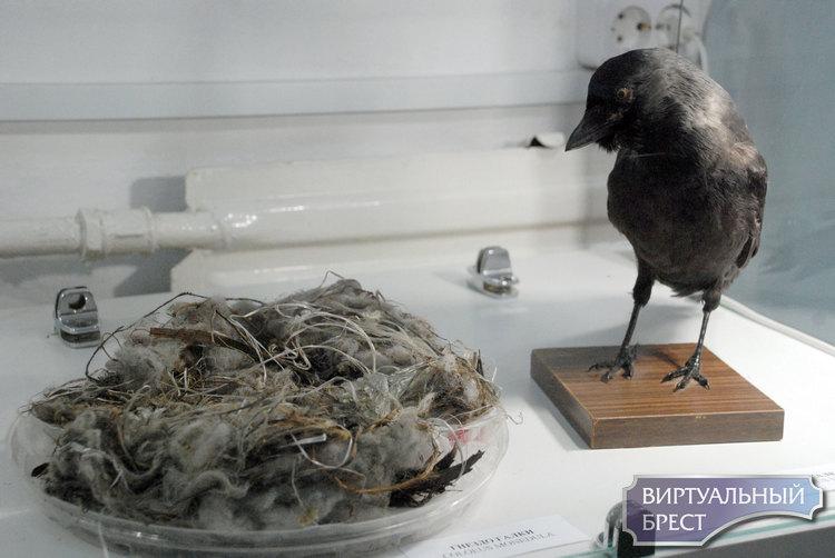 «Дни птиц в Бресте». Хотите с расстояния вытянутой руки заглянуть в дупло дятла?