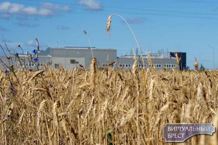 Брестский ЦГЭиОЗ проверил воду, почву и воздух возле ООО «АйПауэр». Какие результаты?