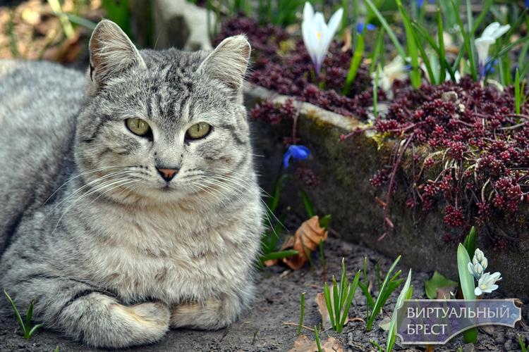 Цветы, коты и пчёлы - большой антикоронавирусный дачно-весенний фоторепортаж