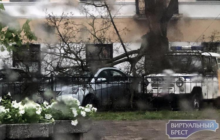 В кармане на Машерова рухнула огромная ветка и придавила автомобили милиции