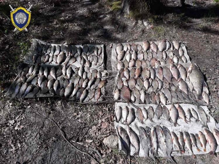 Жители Лунинецкого района подозреваются в незаконной добыче рыбы в крупном размере