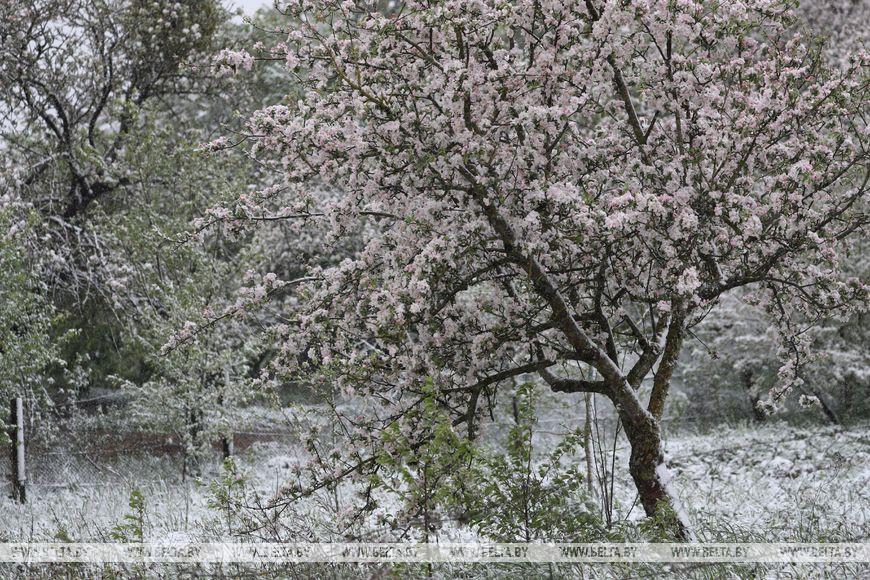 Снег выпал в Гродно. 12 мая. Такое вот глобальное потепление...