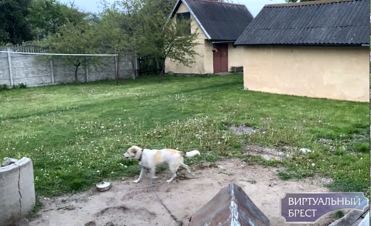 Пёс на частном подворье часто лает, хозяева не реагируют. Можно ли что-то сделать?