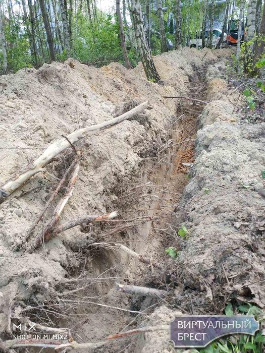 Кабель к новой камере контроля скорости ведут через берёзовую рощу, копают с корнями