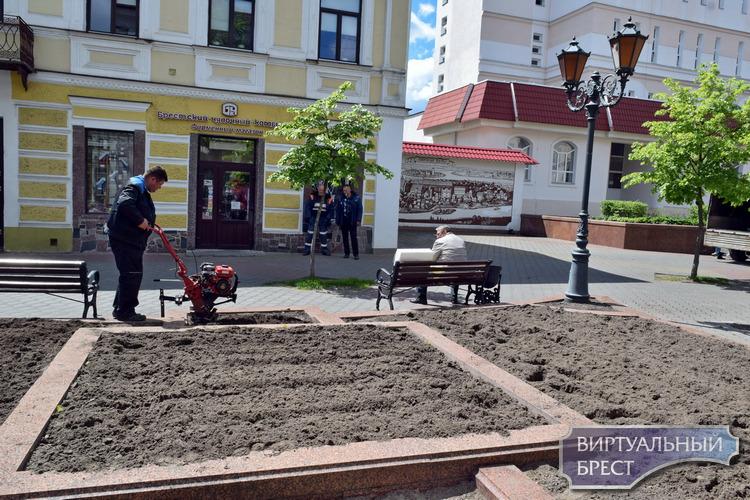 """Бегонии, канны, ценеразии и пеларгонии """"заселяют"""" улицу Советскую. Это очень красиво"""