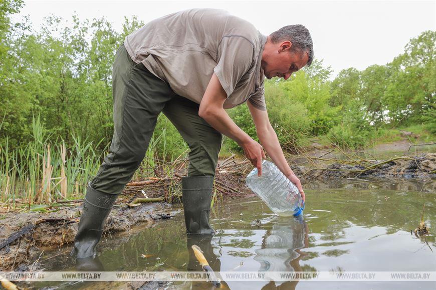 Популяцию исчезающего вида амфибий планируют восстановить в Бресте