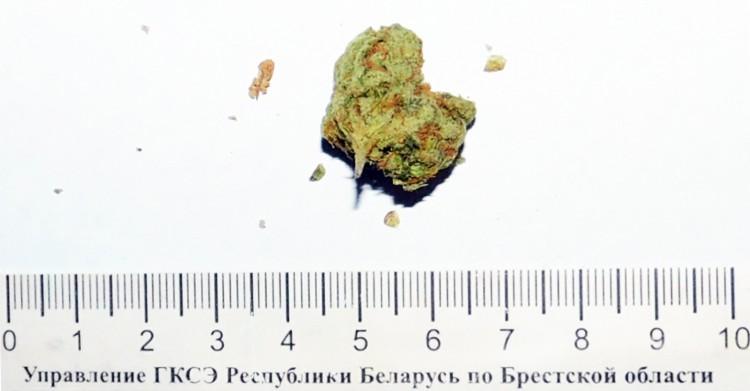 Гражданин Индии пытался переместить через белорусско-польскую границу марихуану