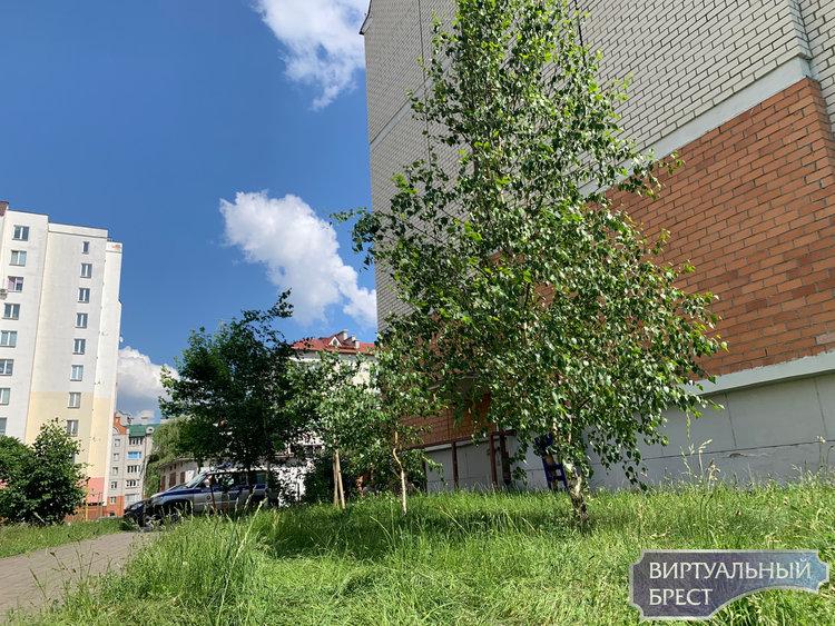 Жильцы района отстояли зелёные насаждения на Васнецова от порчи