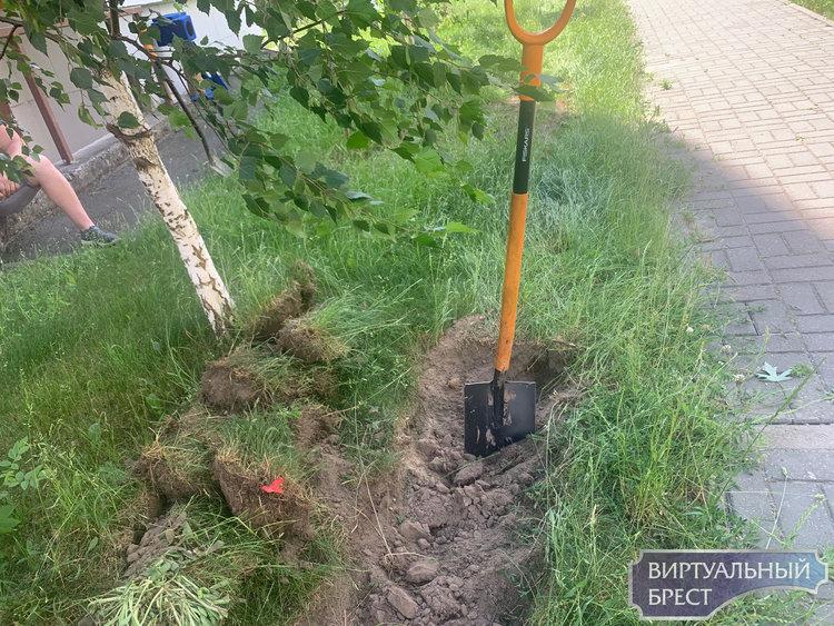 «Согласно документации». Траншею на Васнецова роют, уничтожая молодые деревья