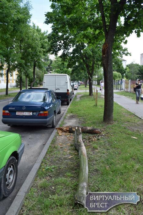 На этот раз повезло... Большая ветка упала аккурат между автомобилей в Бресте