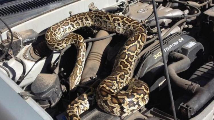 Мужчина вернулся с рыбалки и обнаружил в машине змею. Спасали рептилию спасатели