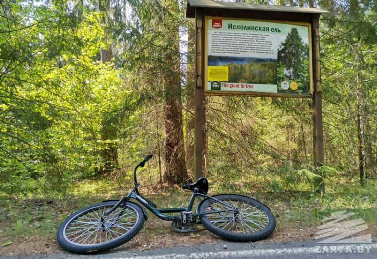 На велосипеде по Беловежской пуще: стоимость, маршруты и море эмоций
