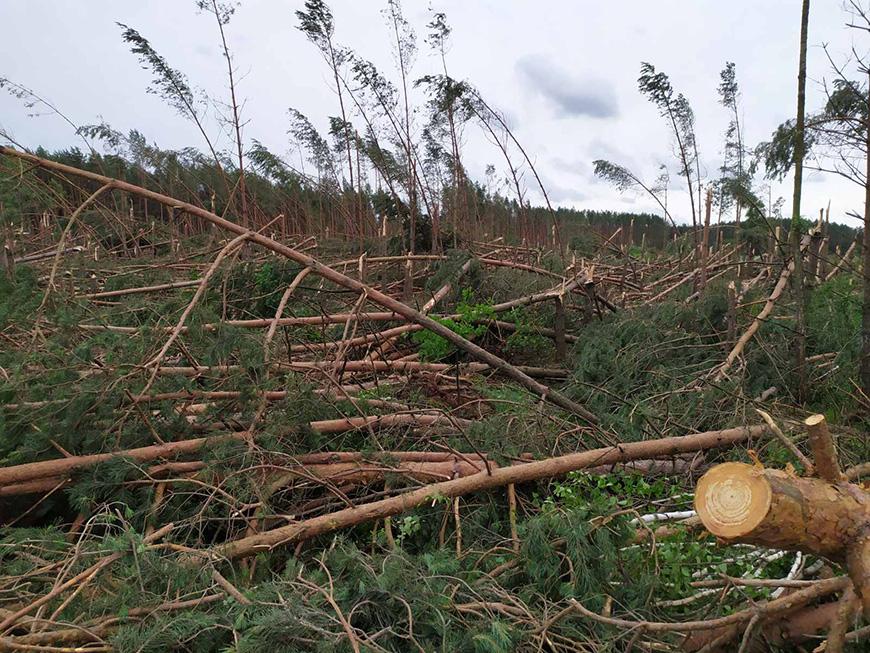 В Брестской области сильный ветер повредил более 550 га леса
