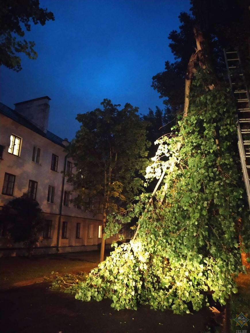 Сильный ветер нарушил электроснабжение в трех районах Брестской области