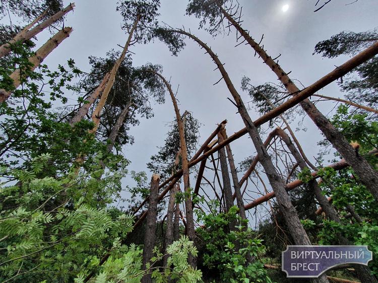 """Бурелом, буревал или ветровал? Побывали в лесу, по которому """"как будто кто-то косой прошёл""""."""