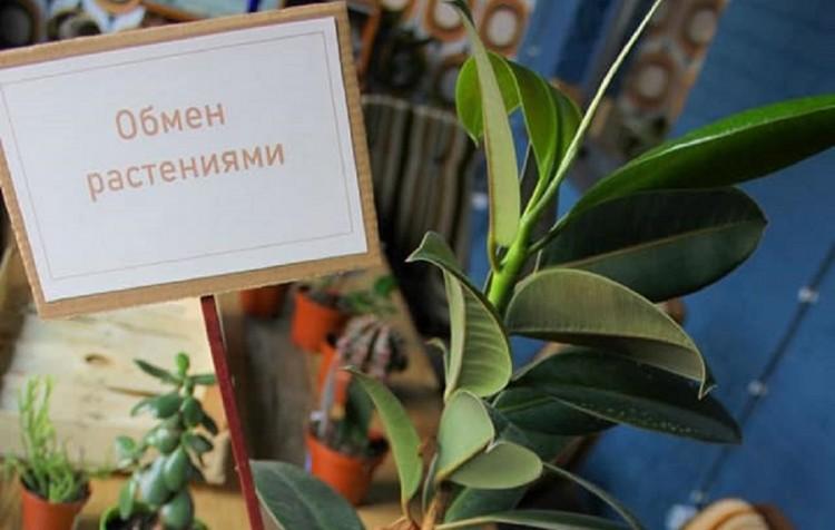 В Бресте открылся стационарный «Обмен растениями»