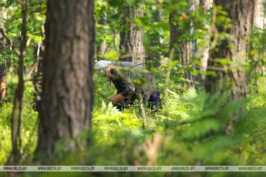 Брестчане проводят уикенд в лесу за сбором черники. Популяция комаров возрастает