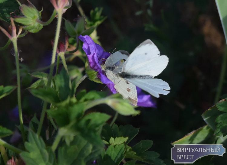"""Дачные приколы: сексуальная жизнь бабочек, урожай косточковых и """"полудохлые"""" от жары кошки"""