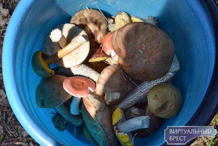Мужик на рынке спровоцировал - в итоге получилась грибная солянка. Репортаж из покорёженного леса