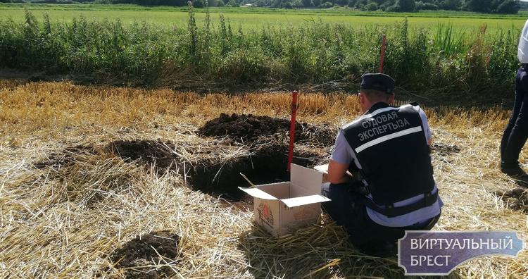 Под Брестом обнаружены останки бойца, погибшего в июле 1944 г при освобождении города